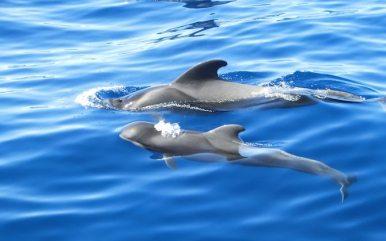 Reiseblog BREITENGRAD53 Teneriffa: Auf der Suche nach Moby Dick 1