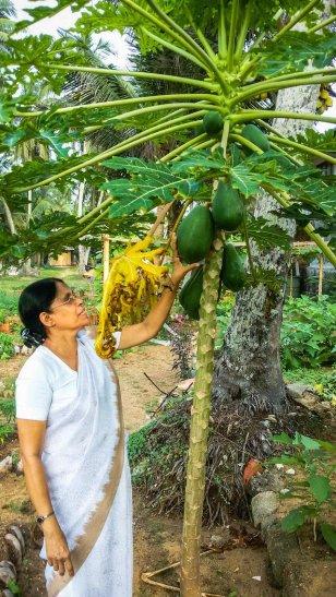 Sri Lanka - Ayurveda - Liane Ehlers-021
