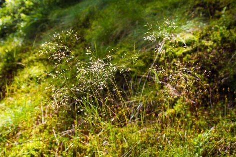 Gräser am Wegesrand am Katschberg - Familienurlaub Österreich