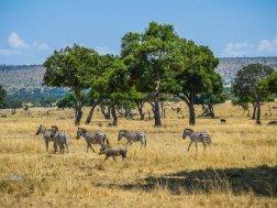 kenia-liane-ehlers-safari-in-kenia-018