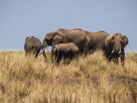 kenia-liane-ehlers-safari-in-kenia-024