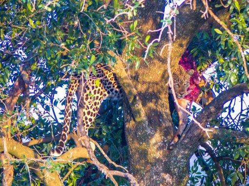 kenia-liane-ehlers-safari-in-kenia-2