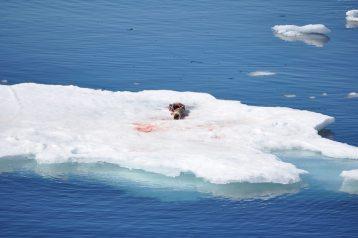 Abenteuer-Arktis-Elisabeth-Konstantinidis-Reiseblog-Breitengrad53-SC_0959