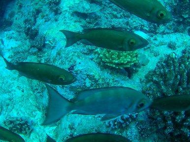 Urlaub Seychellen - Beste Reisezeit Seychellen - Joerg Baldin-054647