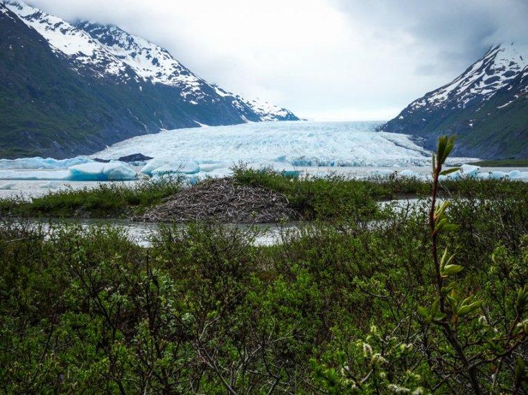 Gletscherwandern in Alaska 2017 - Brigitte Geiselhart-21