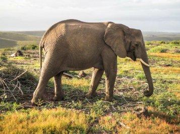 DSC05050 - Urlaub in Suedafrika - Eva Mayring