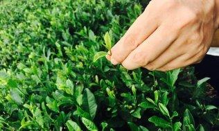 Hangzouh-Teeplantage-China-Reiseblog-Breitengrad53-Elisabeth-Konstantinidis-MG_2684