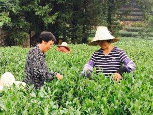 Hangzouh-Teeplantage-China-Reiseblog-Breitengrad53-Elisabeth-Konstantinidis-MG_2690
