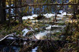 2018 Schweden Smaland Zipline breitengrad53 Wandern 4