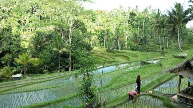 27-Bali-Breitengrad53-Liane-Ehlers-Reiseblog-