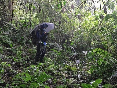 Uganda-Gorillas-Breitengrad53-Reiseblog-Jutta-Lemcke-_2925_korr