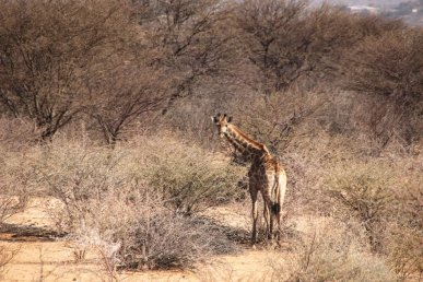 11Liane-Ehlers-Africanexplorer-breitengrad53