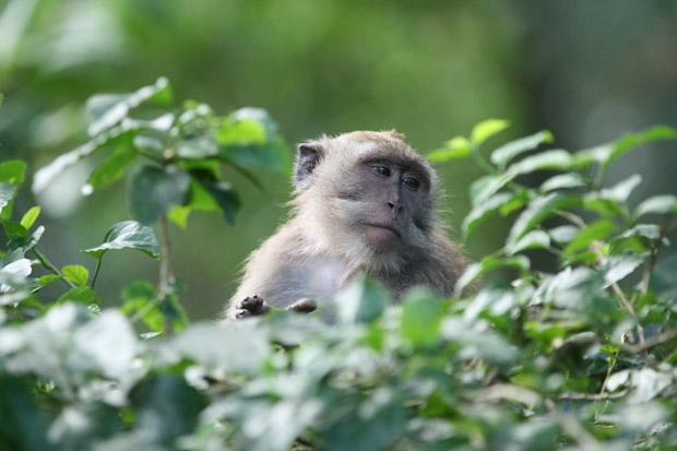 Überall in den Baumwipfeln waren Affen zu finden.