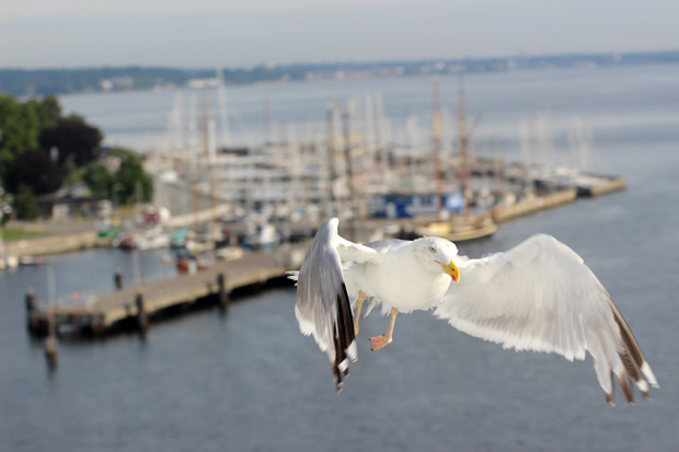 In Kiel begrüßten uns zahlreiche Möwen.