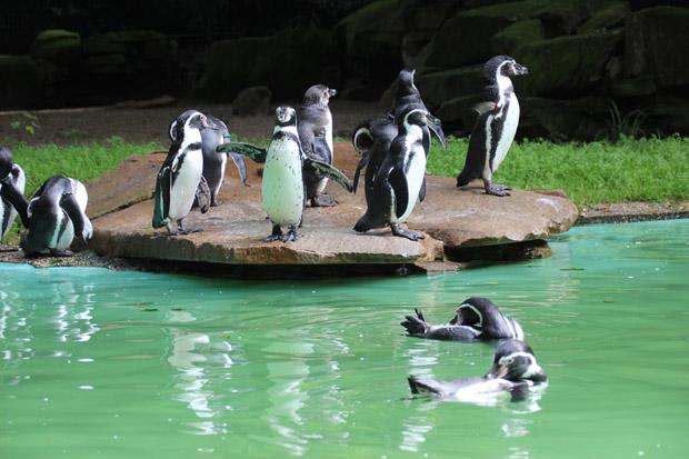Auch die Pinguine bewohnen eine der schöneren Anlagen im Dortmunder Zoo