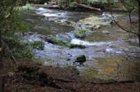 Blick über die Bode im Harz beim Hexenstieg wandern