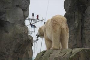 Die Bären im Zoo am Meer schauen gelegentlich den Schiffen nach