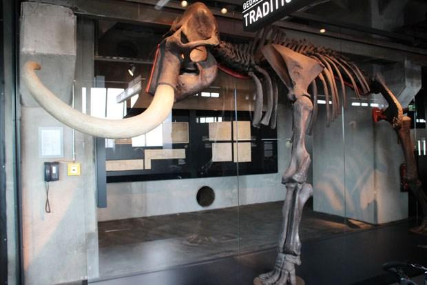 Das Ruhr Museum in der Zeche Zollverein ist einen Besuch wert