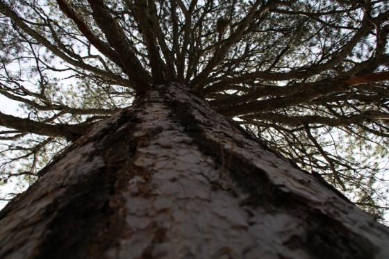 Viele alte und mächtige Bäume säumen den Weg