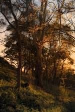 Trees_in_light