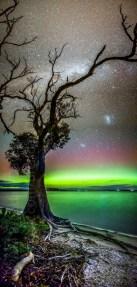 Aurora and Gum Tree, Mortimer Bay, Tasmania