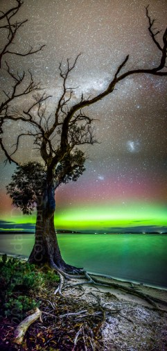 Aurora and Gum Tree, Mortimer Bay, Tasmania