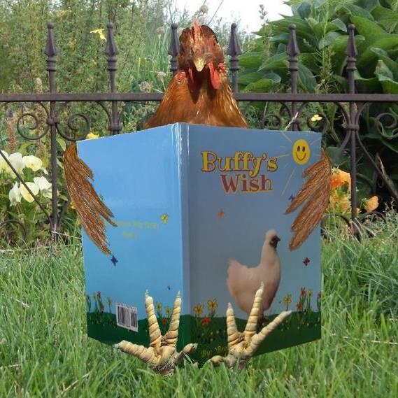 Buffy's Wish Silkie Chicken childrens book