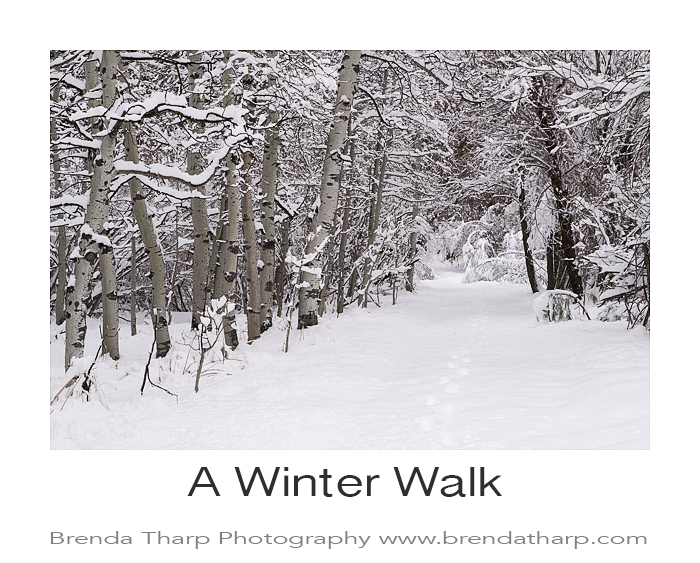 Tharp_Winter_DSC4195
