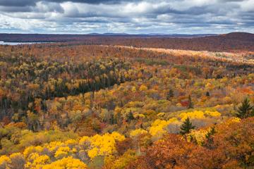 Wide vista of forest in Autumn, Michigan.