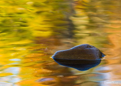 Fall colors reflected in Richfield Creek, Arkansas.