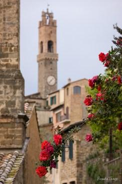 Roses in Montalcino.