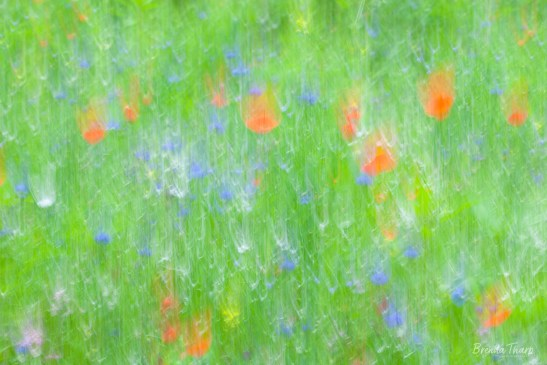 Abstract of summer meadow, Maine.