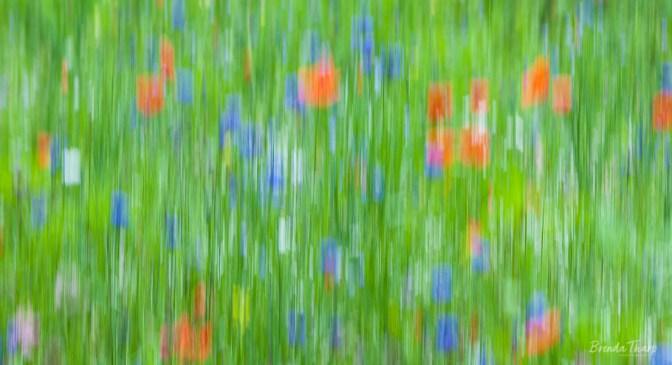 Cheerful Meadow.