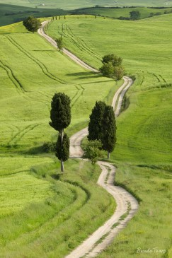 A Country Road, Tuscany.