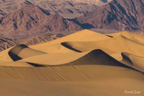 Golden Dunes against Mountains, Death Valley.