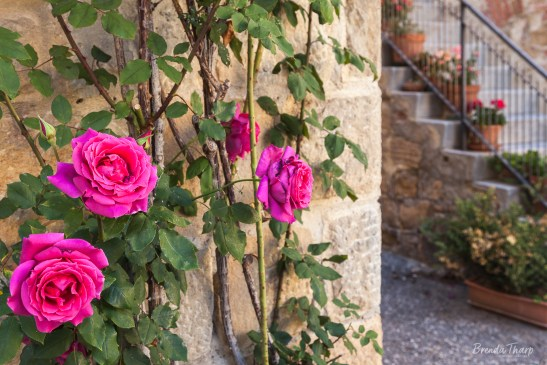 Roses climb a stone wall of a home.