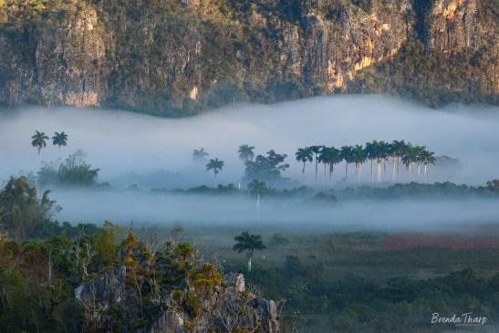 Foggy scene, Viñales Valley, Cuba.