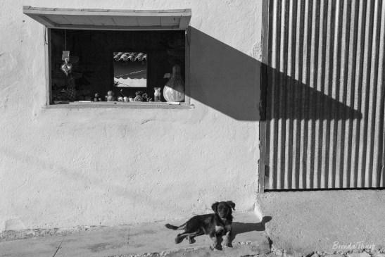 Dog lying by shop in Trinidad, Cuba.