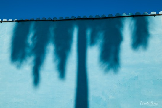 Palm Shadow and Wall, Cuba.
