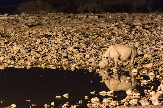 Night Visiting Rhino to Waterhole, Namibia.