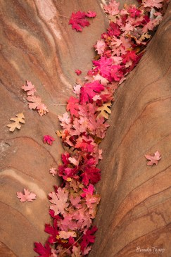 Fallen leaves fill a depression in sandstone.