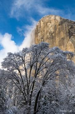 Snow-covered trees beneath El Capitan.