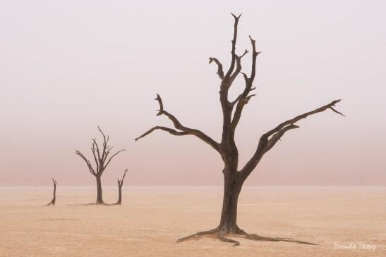 Foggy scene of dead trees, Deadvlei.