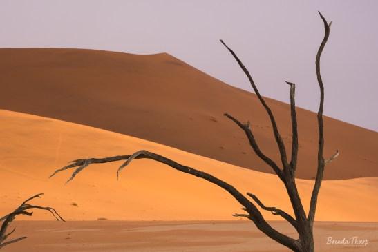 Dead Acacia Trees, Deadvlei.