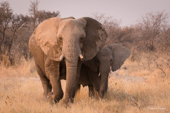 Mother and baby elephant, Namibia