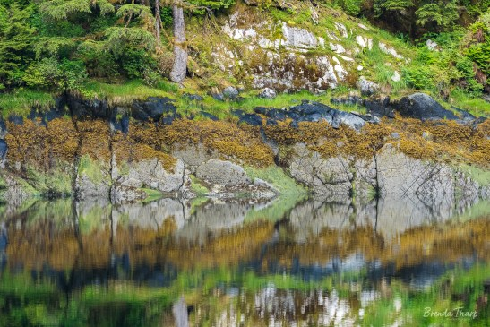 Reflections in quite cover, southeast Alaska.