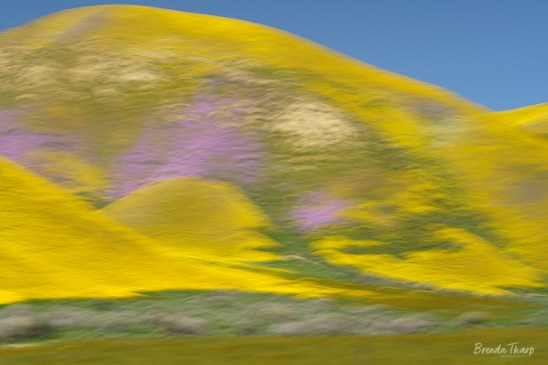 Impression of Spring Hillside