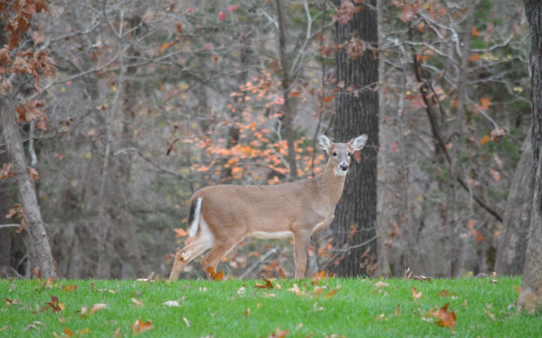 Crossbow deer hunting passes its first test in Missouri