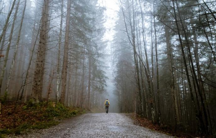 Man hiking a path through the forest