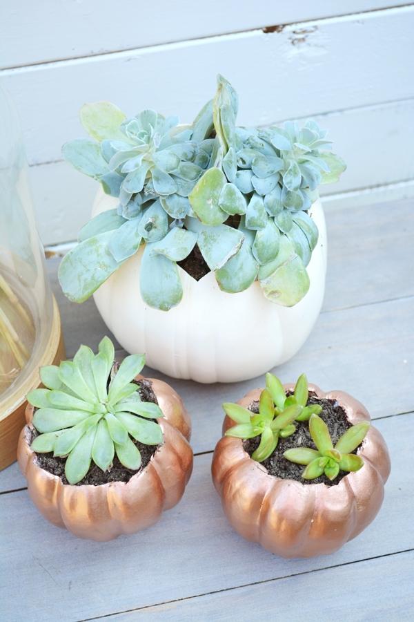 DIY Pumpkin Planters